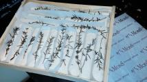 Les bûchettes de manon, à Banon de Provence